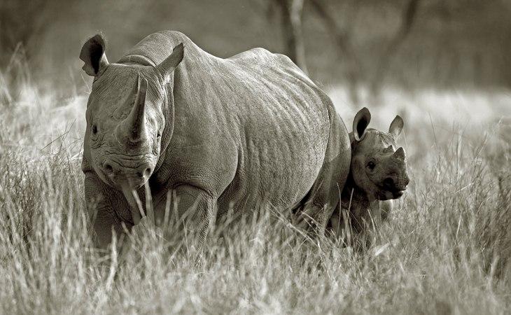 ngorongoro rhino - deoadventure