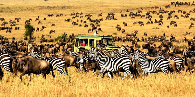Serengeti-National-Park-tour-deoadventure