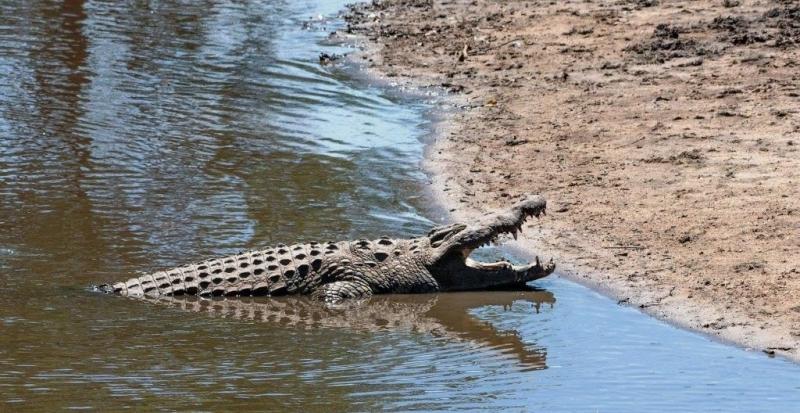 crocodile saadani-deoadventure