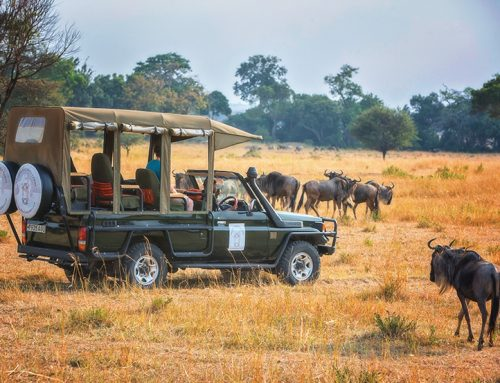 12 nights, 13 days Safari to Arusha, Tarangire, Lake Manyara, Lake Eyasi,    Serengeti & Ngorongoro