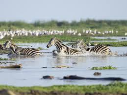 zebra crossing the river -deoadventure