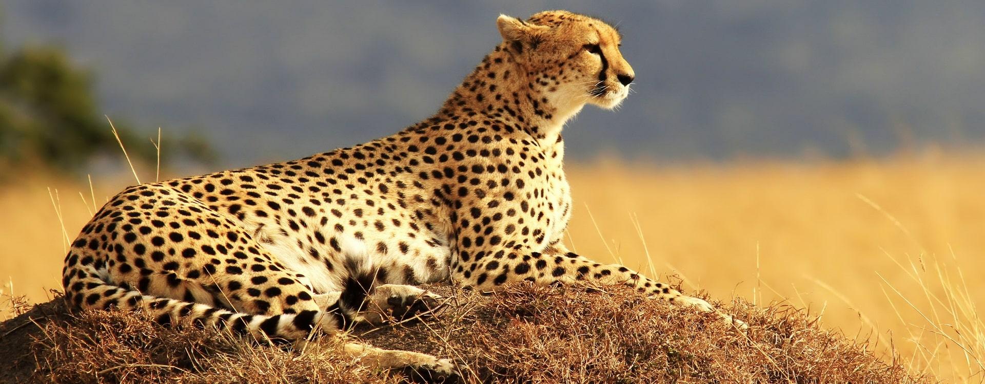 Manyara nation park - deo adventure