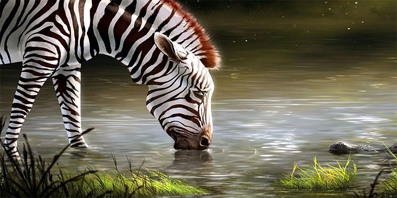 manyara, ngorongoro and serengeti zebra-deoadventure