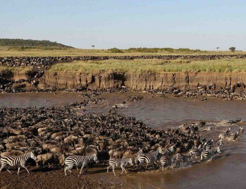 12 nights, 13 days Safari to Tarangire, Lake Manyara, Lake Natron, Serengeti,    Ngorongoro & Arusha