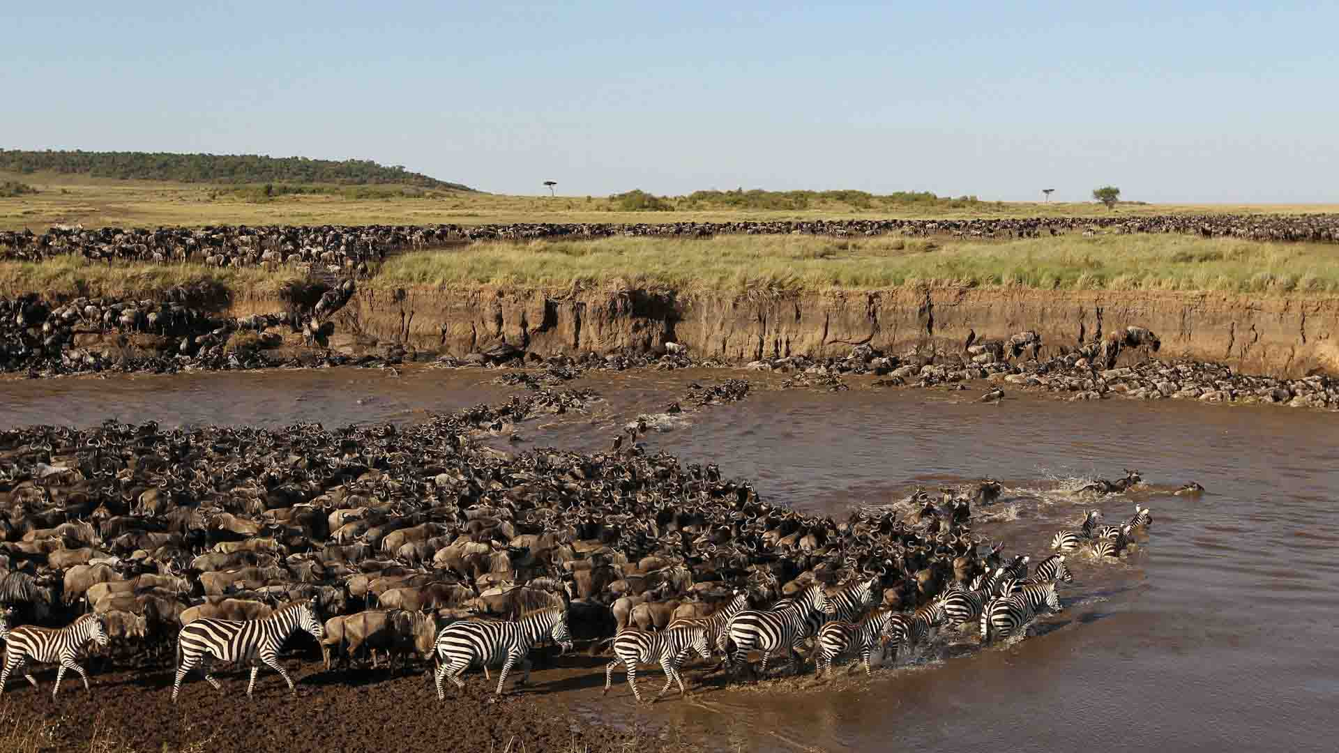 serengeti-national-park-wildebeest-migration-safari-deoadventure