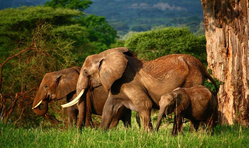 Tarangire National Park - Deoadventure