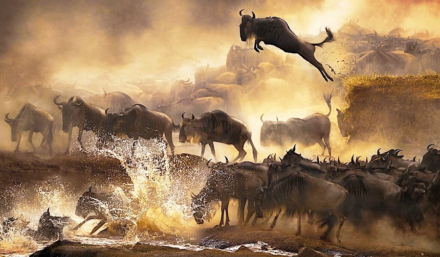 Wildebeest migration at masai mara - deoadventure